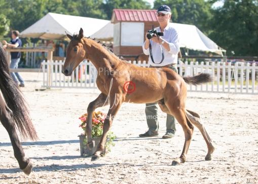 Foal 05 HDP régional 2020-059252