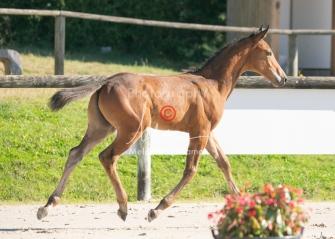 Foal 05 HDP régional 2020-059254