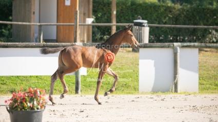 Foal 05 HDP régional 2020-059255