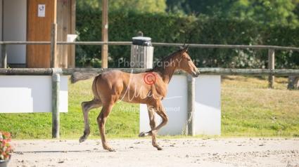 Foal 05 HDP régional 2020-059256