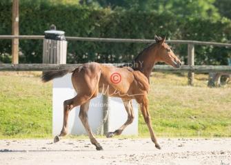 Foal 05 HDP régional 2020-059257