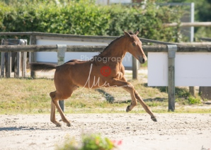 Foal 05 HDP régional 2020-059260