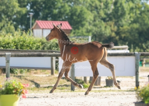 Foal 05 HDP régional 2020-059267
