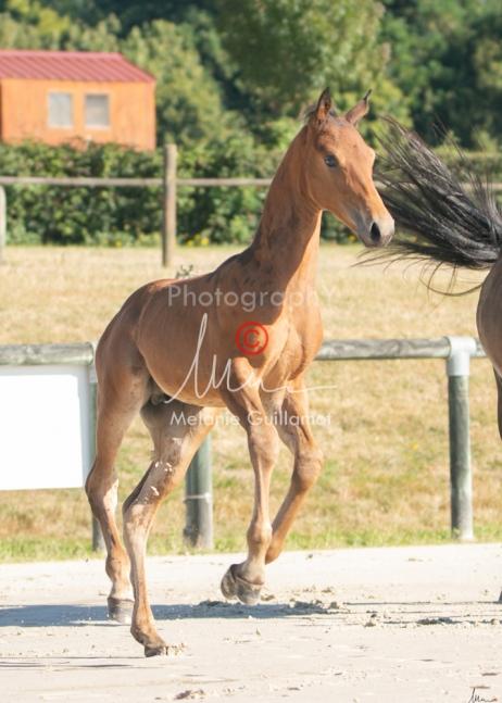 Foal 05 HDP régional 2020-059273