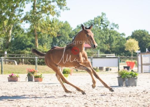 Foal 05 HDP régional 2020-059275