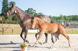 Foal 05 HDP régional 2020-059282