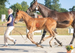 Foal 05 HDP régional 2020-059283