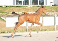 Foal 05 HDP régional 2020-059285