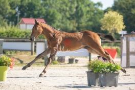 Foal 05 HDP régional 2020-059288
