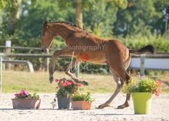 Foal 05 HDP régional 2020-059289
