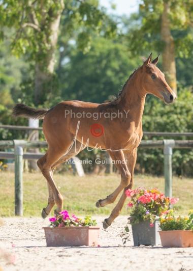 Foal 05 HDP régional 2020-059291