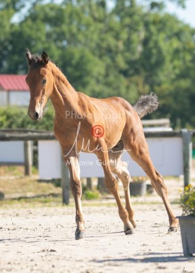 Foal 05 HDP régional 2020-059292