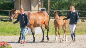 Foal 06 HDP régional 2020-049469