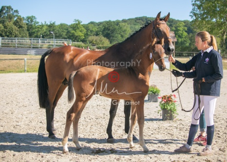 Foal 06 HDP régional 2020-069473