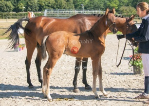 Foal 06 HDP régional 2020-069478