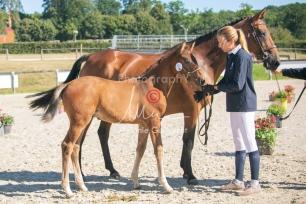 Foal 06 HDP régional 2020-069482