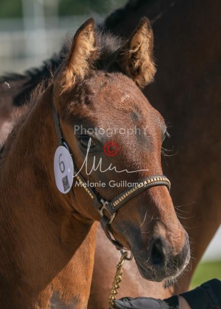 Foal 06 HDP régional 2020-069487