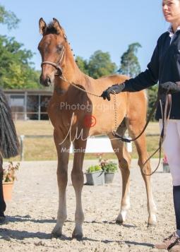 Foal 06 HDP régional 2020-069498