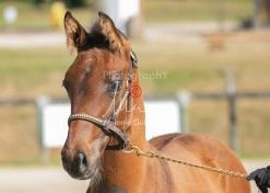 Foal 06 HDP régional 2020-069499