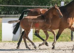 Foal 06 HDP régional 2020-069505