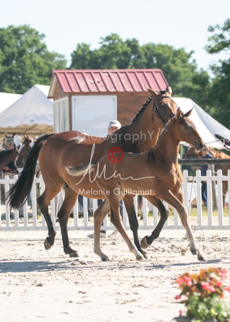 Foal 06 HDP régional 2020-069508