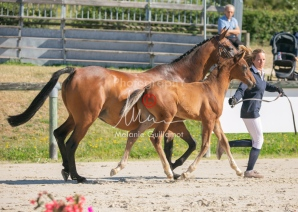 Foal 06 HDP régional 2020-069512