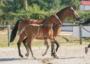 Foal 06 HDP régional 2020-069515