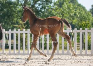 Foal 06 HDP régional 2020-069521