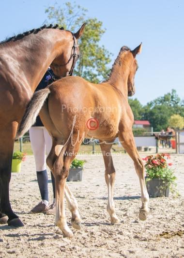 Foal 06 HDP régional 2020-069531