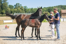 Foal 07 HDP régional 2020-079837