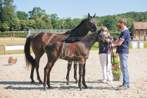 Foal 07 HDP régional 2020-079838