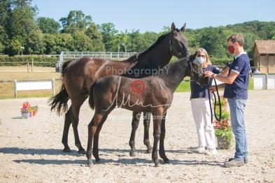 Foal 07 HDP régional 2020-079839