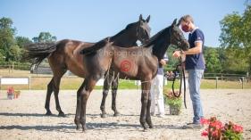 Foal 07 HDP régional 2020-079846