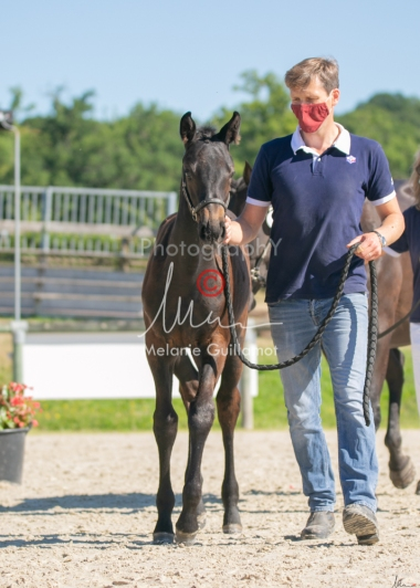 Foal 07 HDP régional 2020-079856