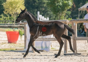 Foal 07 HDP régional 2020-079865