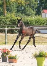 Foal 07 HDP régional 2020-079868