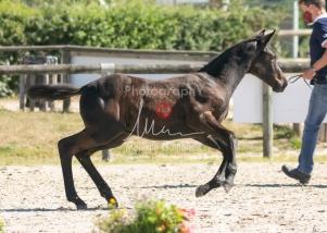 Foal 07 HDP régional 2020-079869