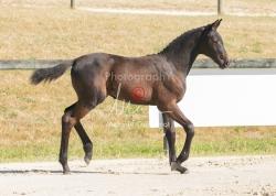 Foal 07 HDP régional 2020-079875