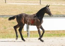 Foal 07 HDP régional 2020-079876