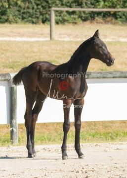 Foal 07 HDP régional 2020-079877
