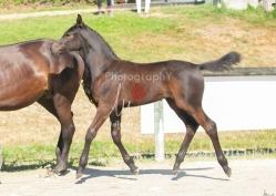 Foal 07 HDP régional 2020-079880