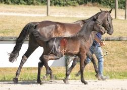 Foal 07 HDP régional 2020-079889