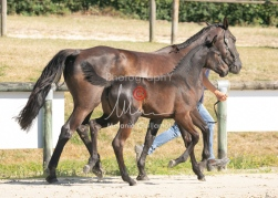 Foal 07 HDP régional 2020-079890