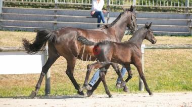 Foal 07 HDP régional 2020-079891