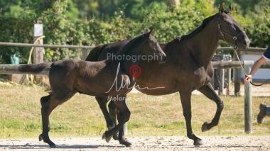 Foal 07 HDP régional 2020-079896