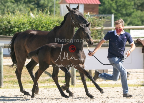Foal 07 HDP régional 2020-079904