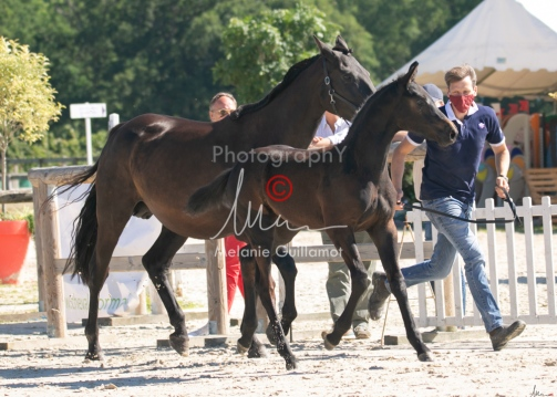 Foal 07 HDP régional 2020-079906