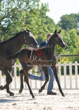 Foal 07 HDP régional 2020-079908