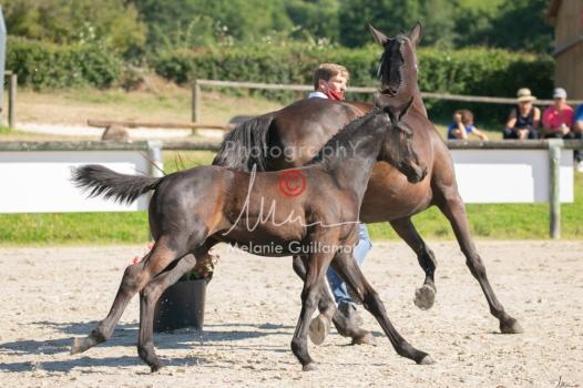 Foal 07 HDP régional 2020-079911