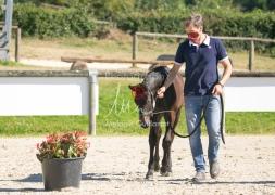Foal 07 HDP régional 2020-159817